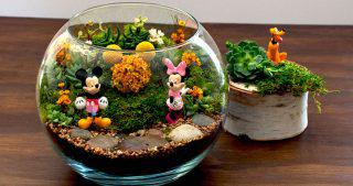 Disney Terrarium Small