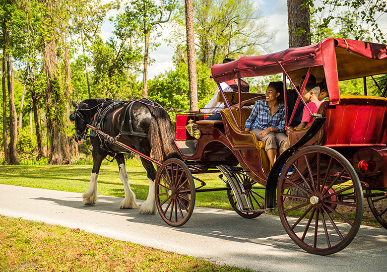 disney carriage ride at disney's fort wilderness resort