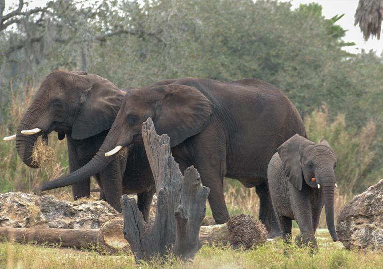 Disney conservation efforts elephants