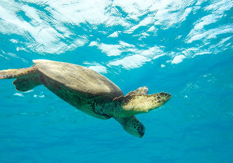 Disney conservation efforts sea turtle