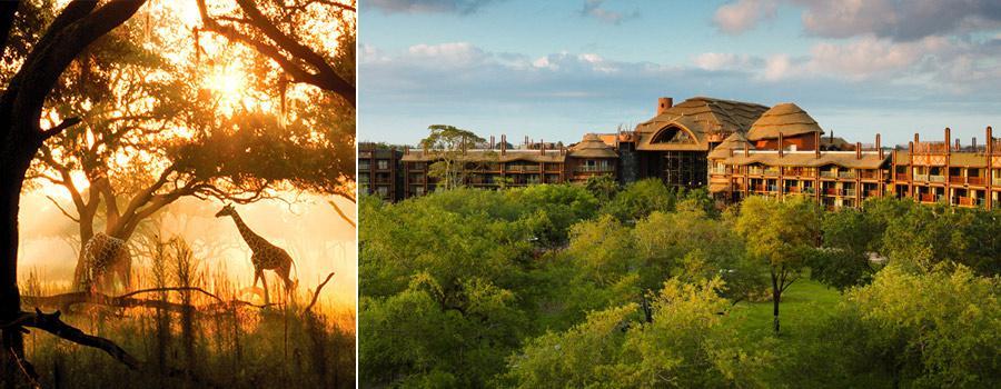 Disney Animal Kingdom Lodge Savanna